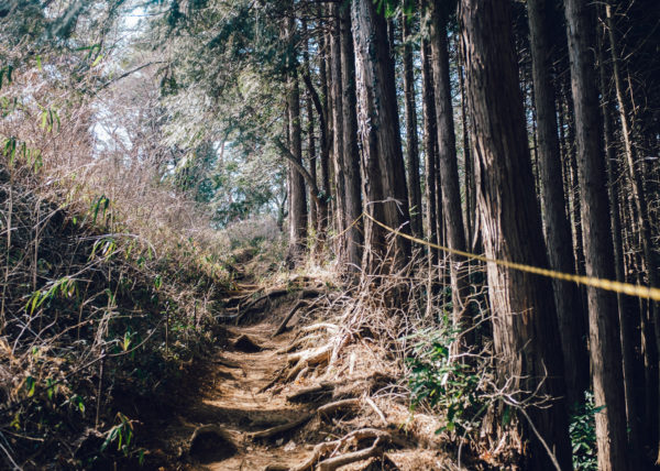 Un petit chemin peu emprunté passe par la forêt au Mont Takao, Japon