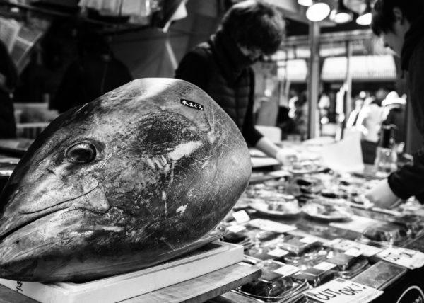 Le marché de Tsukiji et l'incontournable Thon dont les japonais ne peuvent se passer